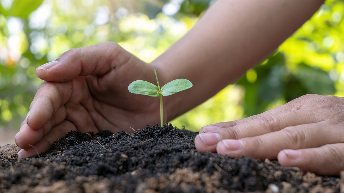 Planting a tree seedling in the soil